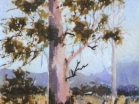 Capertee Valley Gum Tree